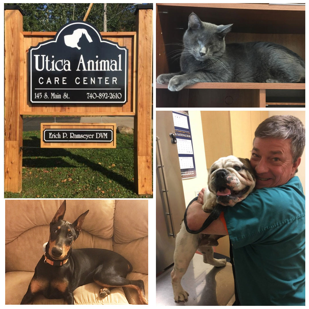 Utica Animal Care Center Collage.